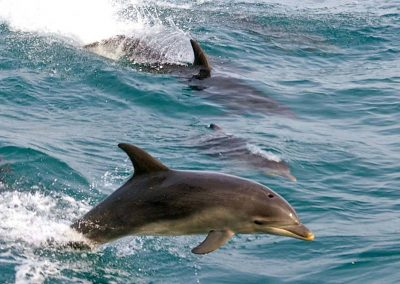 gallery-dolphins